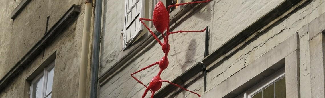 Se avete le formiche per casa…