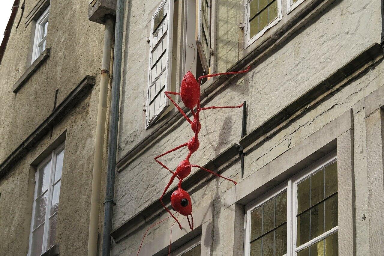 Se avete le formiche per casa - Come eliminare le formiche in casa ...