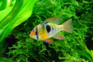 Pesce_alghe