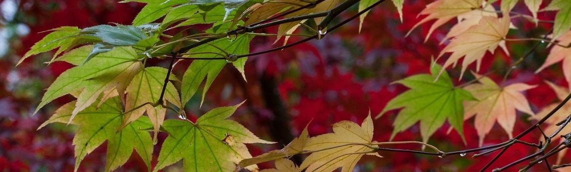 Il bucato ecologico in clima piovoso