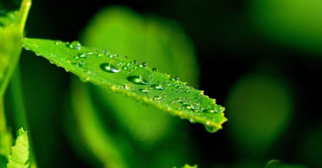 fornitura di detersivi e detergenti ecologici ai GAS