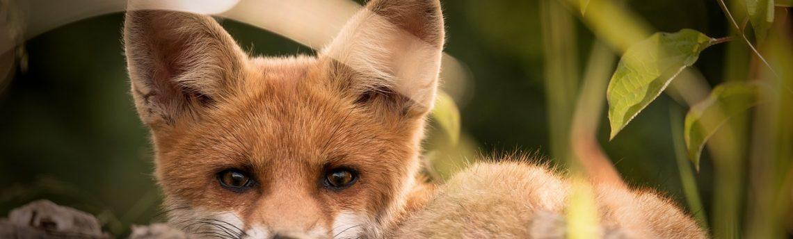 L'importanza di salvare la biodiversità