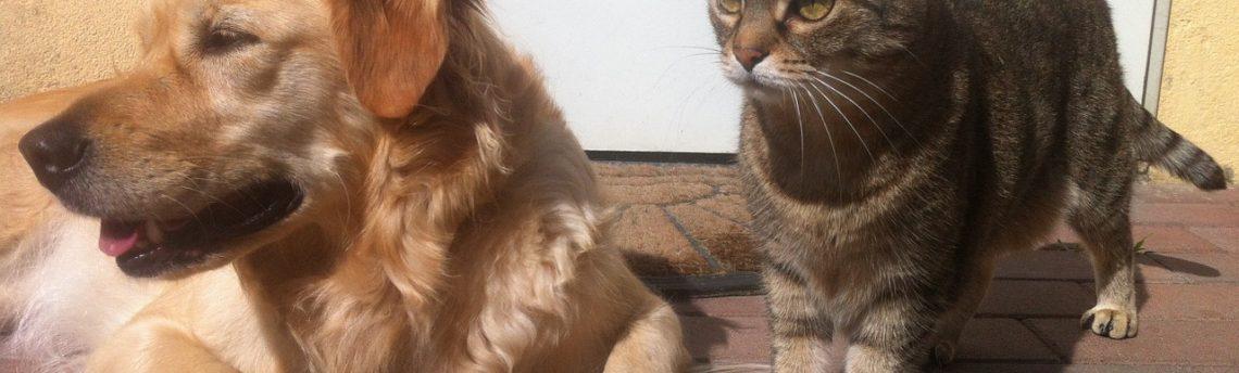 Come deodorizzare i luoghi frequentati dagli animali domestici