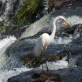 Biodegradabilità rapida e persistenza nell'ambiente: due opposti a confronto